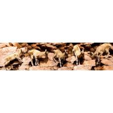 Berggeitjes - panoramische fotoprint