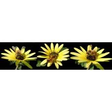 Bijen - fotoprint1