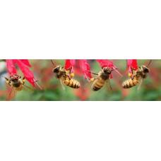 Bijen - fotoprint2