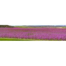 Bloeiende bomen - panoramische fotoprint