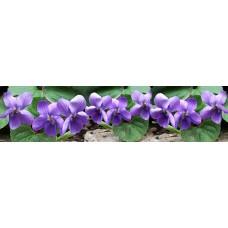 Bloemen - paars