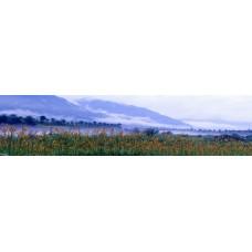 Bloemen voor bergen - panoramische fotoprint
