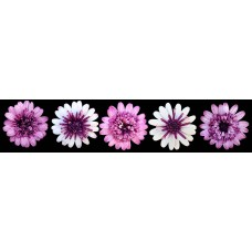 Bloemen - fotoprint 6