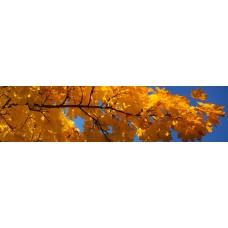 Esdoorn-blad - fotoprint
