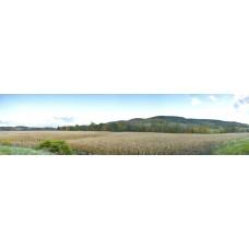 Graanveld - panoramische fotoprint