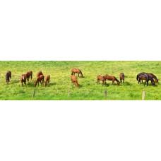 Paarden - panoramische fotoprint